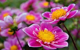 super beautiful flowers wallpapers 2560x1600 wallpapers13 com