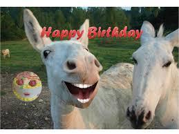 Funny Donkey Memes - funny donkey singing happy birthday youtube