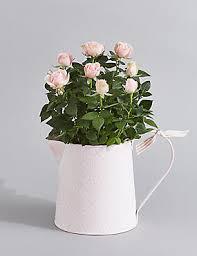 indoor plants house plants u0026 orchid pots m u0026s