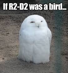 White Owl Meme - 49 best cute owl memes images on pinterest owls funny animals and