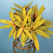 81 best afternoon sun plants images on pinterest sun plants