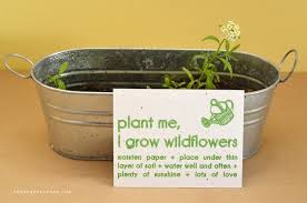 plantable paper how to plant your seeded paper invitations how to germinate and