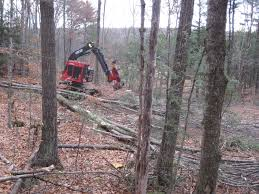 forestry research whole tree harvesting forest society