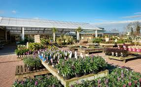 Blackmoor Fruit Trees - bedding plants english roses fruit trees perennials u0026 planters