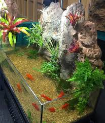 deco riverbank aquarium terrarium vivarium u2013 das aquariums