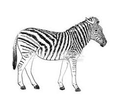 webbywanda tv how to draw a cartoon zebra how to draw a zebra