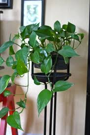 121 best houseplants images on pinterest gardening plants