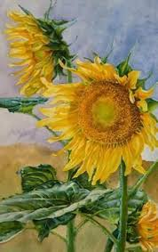 sunflowers still life with flowers pinterest sunflowers
