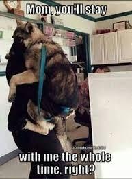 Dog At Vet Meme - 407 best animal funnies images on pinterest funny animals cute