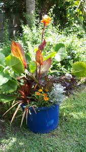 Tropical Potted Plants Outdoor - 60 best garden deck plant ideas images on pinterest gardening
