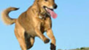 america u0027s healthiest pets health