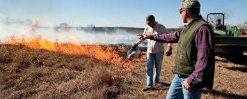 how to conduct a prescribed burn