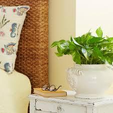 11 hard to kill houseplants diy