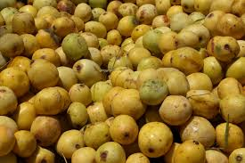 Marula Tree Fruit