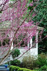Georgia Botanical Garden by 31 Best Coastal Georgia Botanical Gardens Images On Pinterest