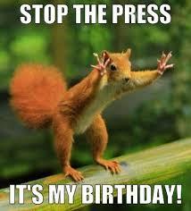 Funny Animal Birthday Memes - inspirational funny animal birthday memes 52 best images about