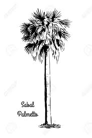 vector sketch illustration black silhouette of sabal palmetto