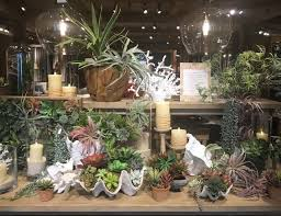 the gracious posse terrariums easy eco friendly and entertaining