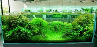 Amano Aquascaping Layout For New Tank Uk Aquatic Plant Society
