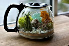 plants and coffee let u0027s make a coffee pot terrarium u2014 a