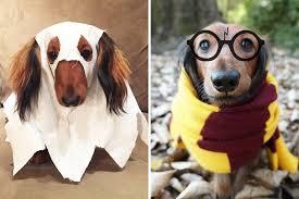 pet costumes diy dog costumes for 2017 edition django