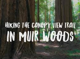 Muir Woods Map Hiking The Canopy View Trail In Muir Woods National Monument