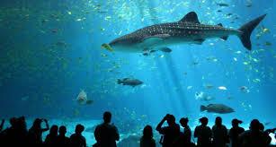 behold the wonderful ocean world at s e a aquarium singapore