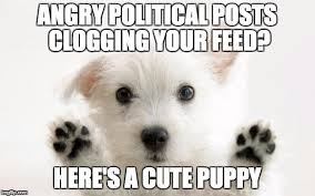 Cute Puppy Meme - angry political posts clogging your feed here s a cute puppy meme