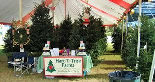 christmas tree lot in boynton beach florida hart t tree farms