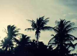 palm tree wind blowing day beautiful day gif
