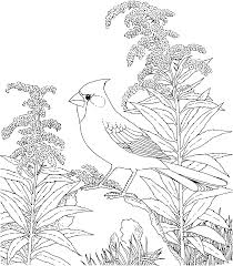 birds and flowers coloring pages u0026 pictures imagixs line art