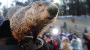 10 fascinating knew groundhog
