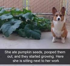 Hyper Dog Meme - dog memes meme city
