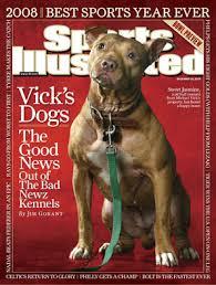 american pitbull terrier kennels usa byte kennels american pit bull and patterdale terriers
