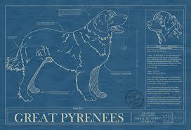 blue print size great pyrenees animal blueprint company