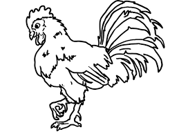 rooster coloring page simple with images of rooster coloring model