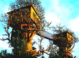 fascinating 20 tree house plans for two trees design inspiration