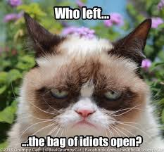 Grumpy Cat Friday Meme - friday grumpy cat meme 14 grumpy cat pinterest funny