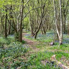 plant trees woodland trust