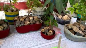 21 creative gardening ideas with re use of waste material part 1 hindi urdu 7 5 16 you