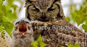 Happy Birthday Owl Meme - i am the owl bmxmuseum com forums