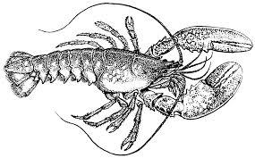 lobster outline clipartion com