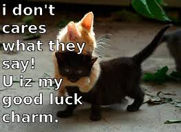 Good Luck Cat Meme - good luck charm black cat cats and dogs pinterest black cats