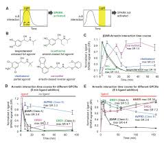 time gated detection of protein protein interactions with