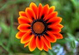 Nice Flowers 19 Best Love Images On Pinterest Flowers Nice Flower And Pretty