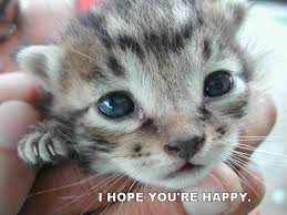 Happy Kitten Meme - i hope you re happy cat macros