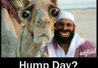 Hump Day Memes - hump day desktop backgrounds