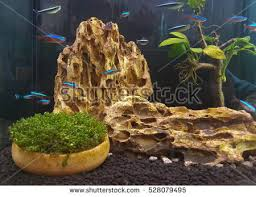 Asian Themed Fish Tank Decorations Guppy Stock Images Royalty Free Images U0026 Vectors Shutterstock