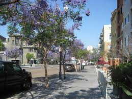 10 drought tolerant trees for san diego install it direct