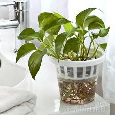 preferential pots plus completed then decorations plants